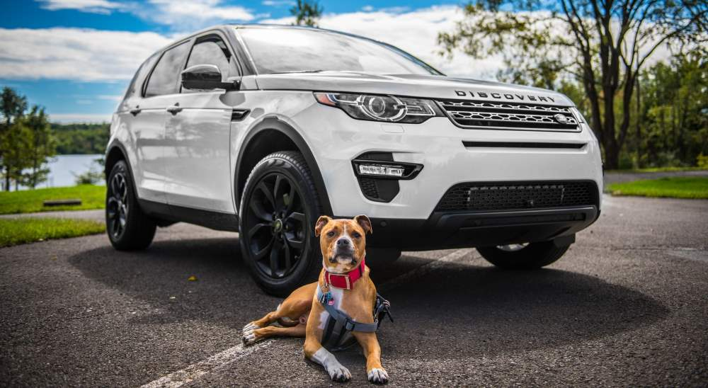 dog sitting in front of landrover discovery